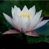喜羊羊_1f