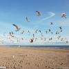 碧海金沙滩