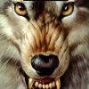 夜苍狼...