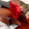沉默的小提琴