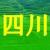 泸州陈的头像