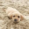 doggie-mirro