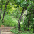 森林26624887