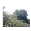 繁星之夜-瓦尔特